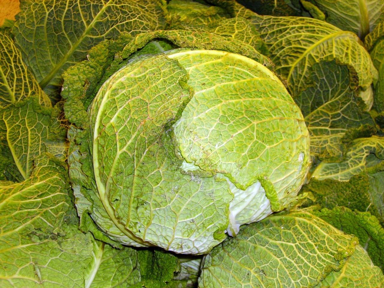 Kapusta – niedocenione warzywo