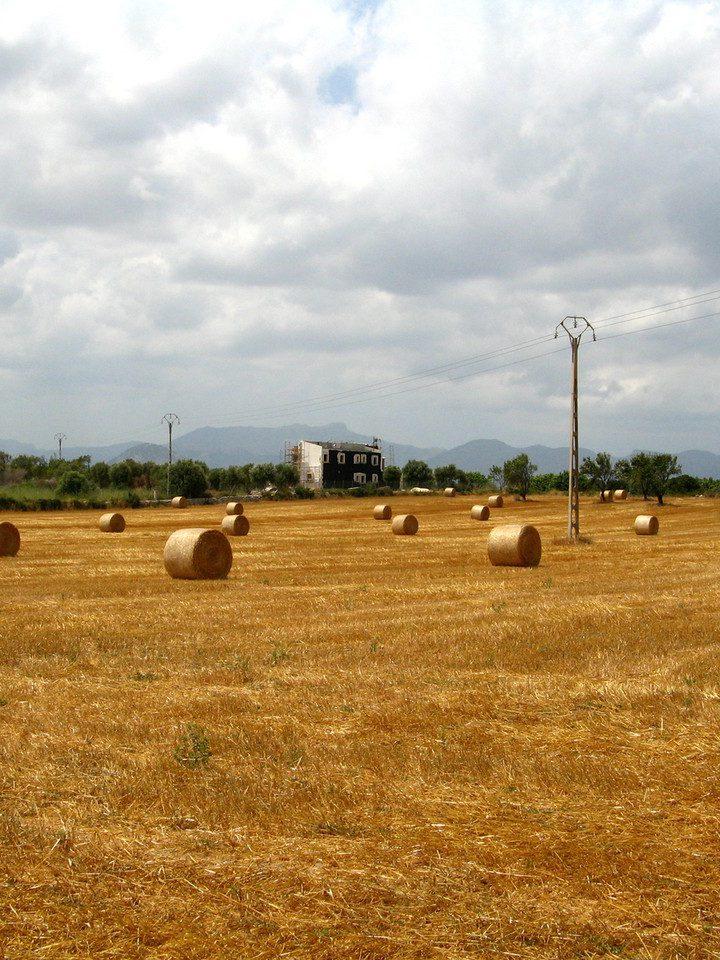 Kolektywizacja rolnictwa – reforma zmian